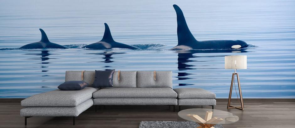 3 killer whales wall mural