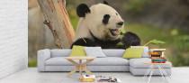 Panda eating bamboo shoot wallpaper mural, Safari, Nature wallpapers