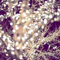 Holiday Lights Backdrop