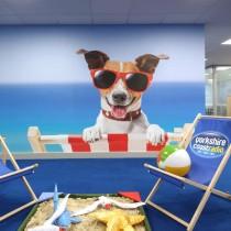 HS_dog_deckchair