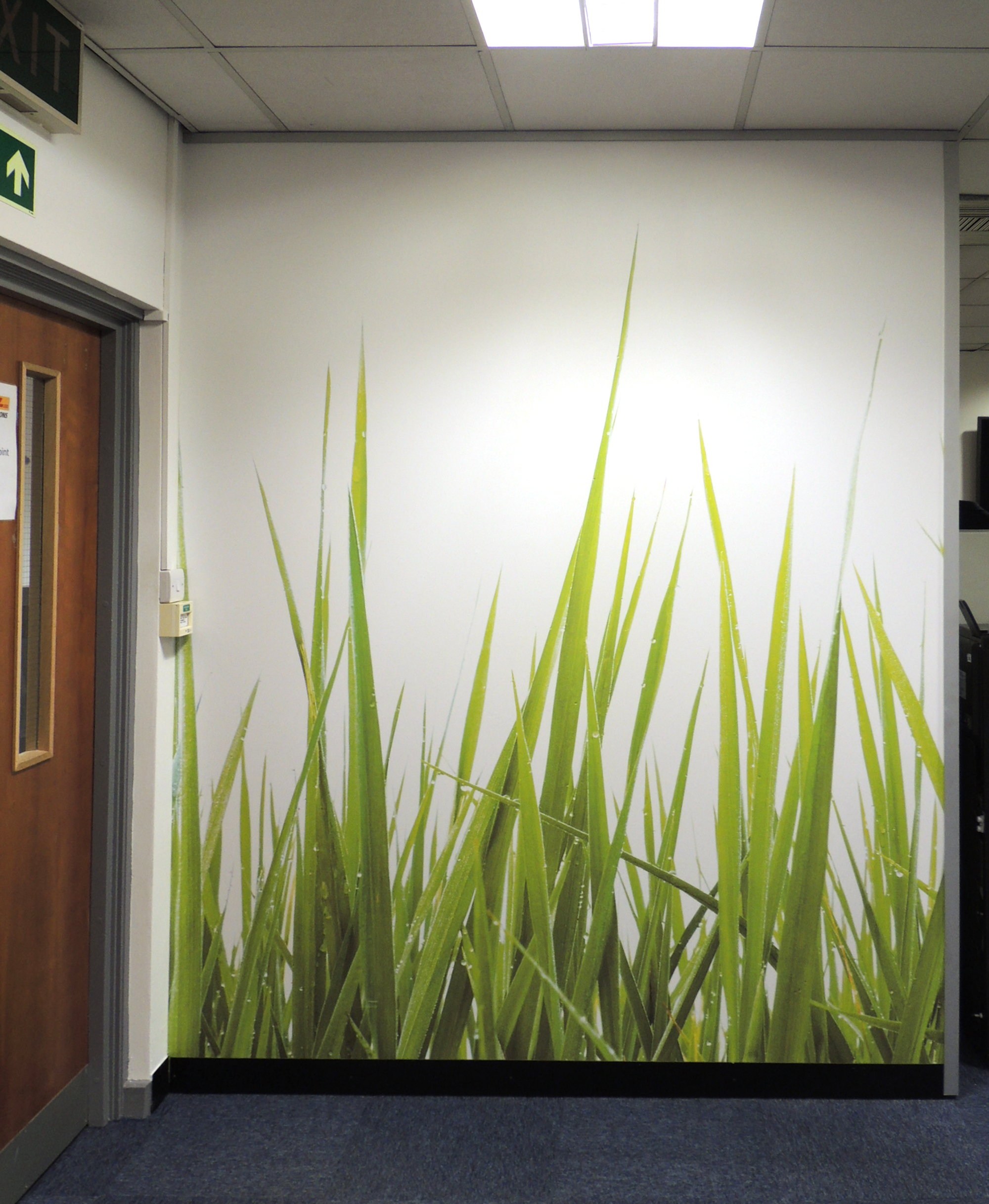 grass custom wallpaper for DHL