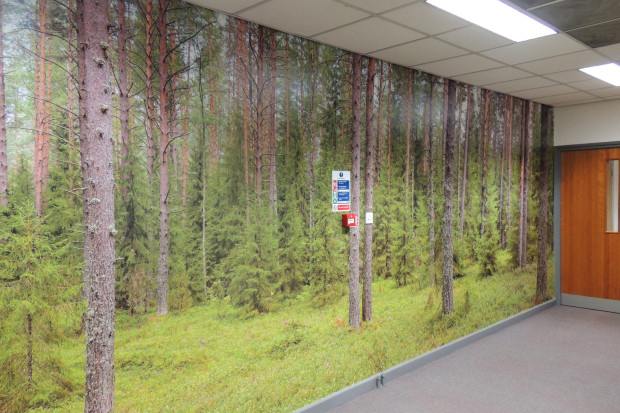Forest Trees wallpaper mural UK free delivery