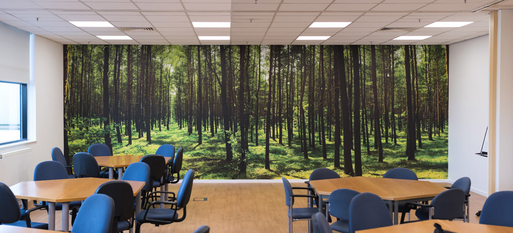 Custom Forest Wall Mural by Pictowall