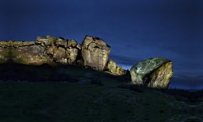 Cow and Calf Dusk Wallpaper mural