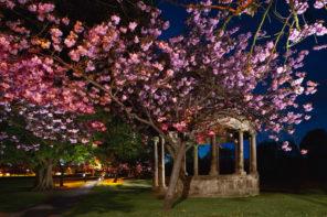 HGT Night Blossom Wallpaper mural