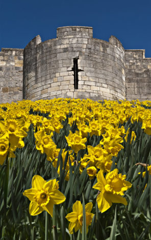 York City Wall Daffs Wallpaper mural