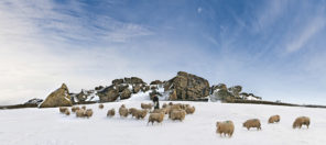 arncliff crag winter sheep Wallpaper mural