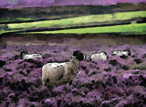 sheep in heather Wallpaper mural