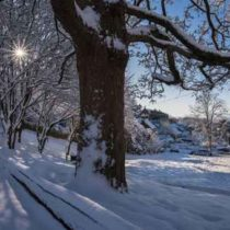 Winter scene at Clent, Worcestershire